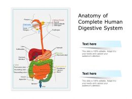 Anatomy Of Complete Human Digestive System