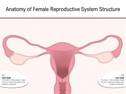 Anatomy Of Female Reproductive System Structure