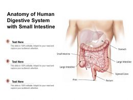 Anatomy Of Human Digestive System With Small Intestine