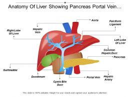 Anatomy Of Liver Showing Pancreas Portal Vein Falciform Ligament