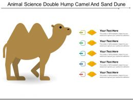 Animal Science Double Hump Camel And Sand Dune