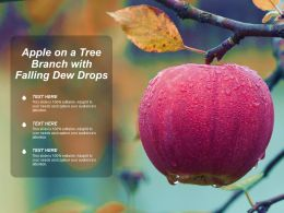 Apple On A Tree Branch With Falling Dew Drops