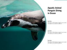Aquatic Animal Penguin Diving In Ocean