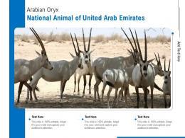 Arabian Oryx National Animal Of United Arab Emirates