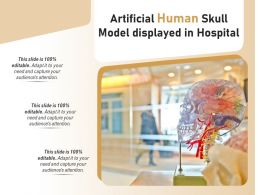 Artificial Human Skull Model Displayed In Hospital