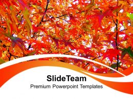 autumn_leaves_nature_powerpoint_templates_ppt_themes_and_graphics_0213_Slide01