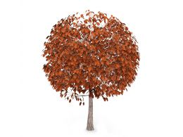autumn_tree_with_brown_color_leaves_stock_photo_Slide01