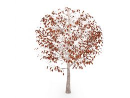 Autumn Tree With Few Brown Color Leaves Stock Photo