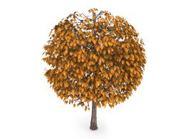 Autumn Tree With Golden Color Leaves Stock Photo