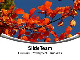 autumn_with_flowers_theme_background_powerpoint_templates_ppt_themes_and_graphics_0513_Slide01