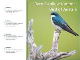 Barn Swallow National Bird Of Austria