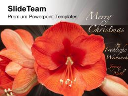 beautiful_flowers_for_wishes_merry_christmas_powerpoint_templates_ppt_themes_and_graphics_0513_Slide01