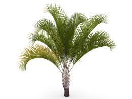 Beautiful Green Plant Graphic Stock Photo