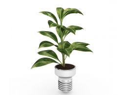 Beautiful Indoor Plant Graphic Stock Photo