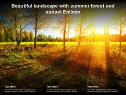 Beautiful Landscape With Summer Forest And Sunset Enliven