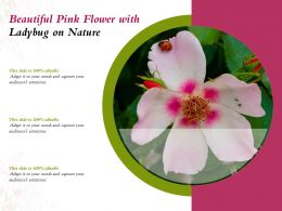 Beautiful Pink Flower With Ladybug On Nature