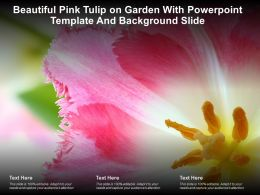 Beautiful Pink Tulip On Garden With Powerpoint Template And Background Slide