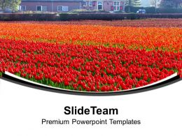 Beautiful Tulips Garden Decoration Powerpoint Templates Ppt Themes And Graphics 0313