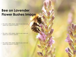 Bee On Lavender Flower Bushes Image