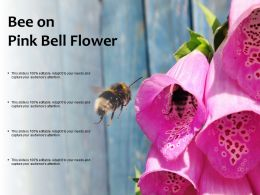 Bee On Pink Bell Flower