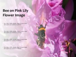 Bee On Pink Lily Flower Image