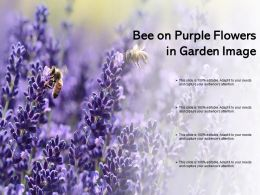 Bee On Purple Flowers In Garden Image