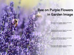 Bee On Purple Flowers In Garden Image