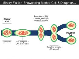Binary Fission Showcasing Mother Cell And Daughter Cells