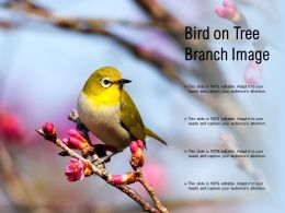 Bird On Tree Branch Image