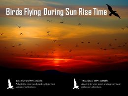 Birds Flying During Sun Rise Time