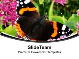 Black And Yellow Butterfly For Nature Theme PowerPoint Templates PPT Themes And Graphics 0513