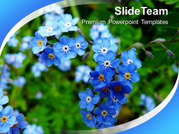 Blooming Flowers Nature Powerpoint Templates Ppt Themes And Graphics 0213