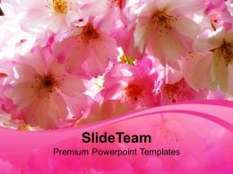 Blossoms Beauty Nature PowerPoint Templates PPT Themes And Graphics 0213