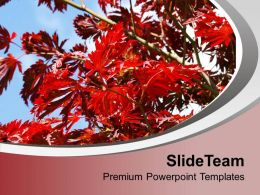 blossoms_flower_with_abstract_background_powerpoint_templates_ppt_themes_and_graphics_0513_Slide01
