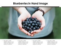 Blueberries In Hand Image