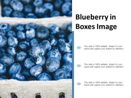 Blueberry In Boxes Image