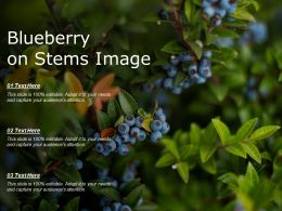 Blueberry On Stems Image