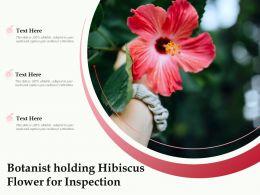 Botanist Holding Hibiscus Flower For Inspection