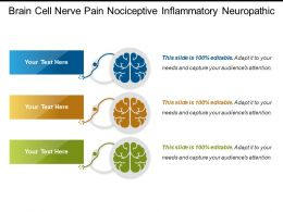 Brain Cell Nerve Pain Nociceptive Inflammatory Neuropathic