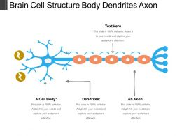 Brain Cell Structure Body Dendrites Axon