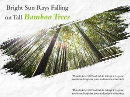 Bright Sun Rays Falling On Tall Bamboo Trees