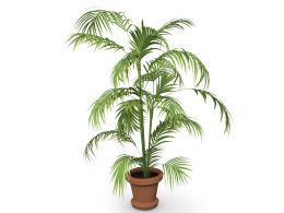brown_pot_and_green_plant_stock_photo_Slide01