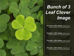 Bunch Of 3 Leaf Clover Image