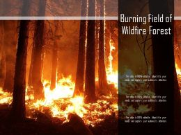 Burning Field Of Wildfire Forest