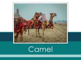 Camel Gear Across Instruments Pyramid Captivity