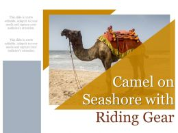 Camel On Seashore With Riding Gear
