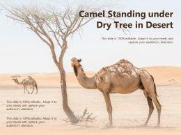Camel Standing Under Dry Tree In Desert