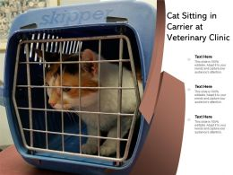 Cat Sitting In Carrier At Veterinary Clinic