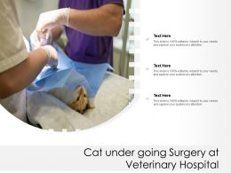 Cat Under Going Surgery At Veterinary Hospital