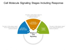 Cell Molecule Signaling Stages Including Response